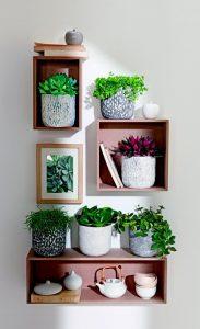 houseplant-display-9