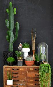 houseplants-display-ideas-3