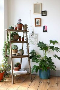 houseplants-display-ideas-6