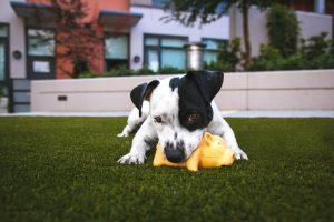 best-puppy-chew-toy